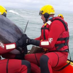 dolphin rescued jeffreys bay